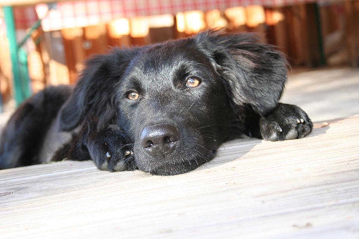 hund jährliche impfung