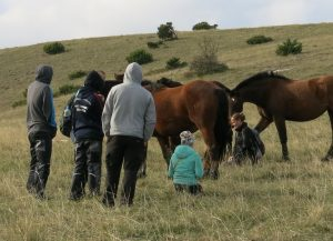 pganuccio 6 pferde